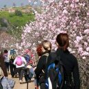 Countryside walks to see Algarve's beautiful almond blossoms