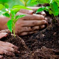 Zoomarine and Algar team up to plant 42,000 trees in Algarve